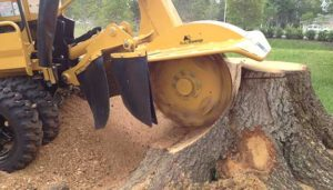 Stump grinding and stump removal