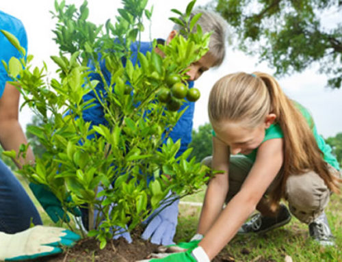 Planting A Tree: The Right Way