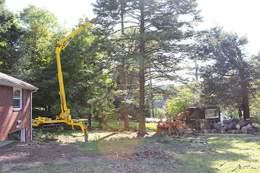 Artistic Tree & Landscape Creations tree services — advanced Spider Lift equipment