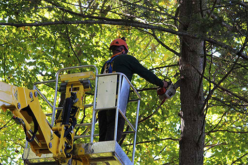 Artistic Tree & Landscape Creations tree services — trimming, removal, pruning