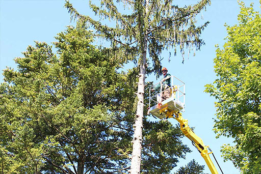 Artistic Tree & Landscape Creations tree services — safely trim branches away from power lines