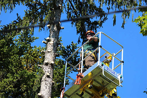 Artistic Tree & Landscape Creations tree services — safely remove branches from power lines