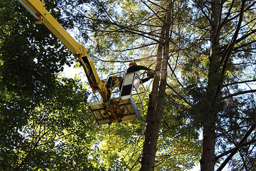 Artistic Tree & Landscape Creations tree services — trimming, removal, trimming
