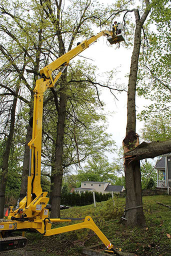 Artistic Tree & Landscape Creations tree services — removal, trimming, pruning — advanced Spider Lift equipment