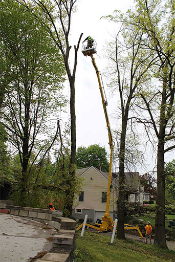 Artistic Tree & Landscape Creations tree services — residential advanced Spider Lift equipment