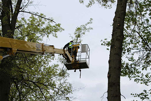Artistic Tree & Landscape Creations tree services — trimming, branch removal and pruning