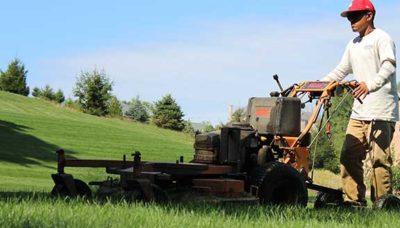 Lawn Maintenance & Grass Cutting