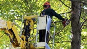 Tree Service & Landscaping Contractor