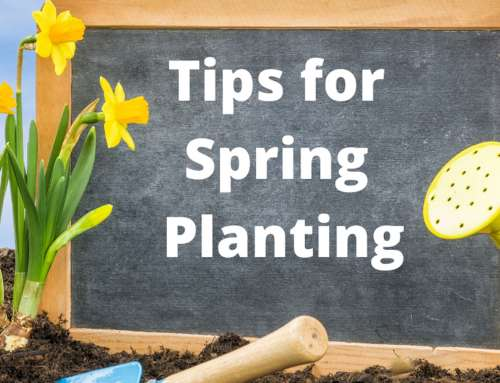 Now Is The Time For Spring Planting For The Ultimate Landscape