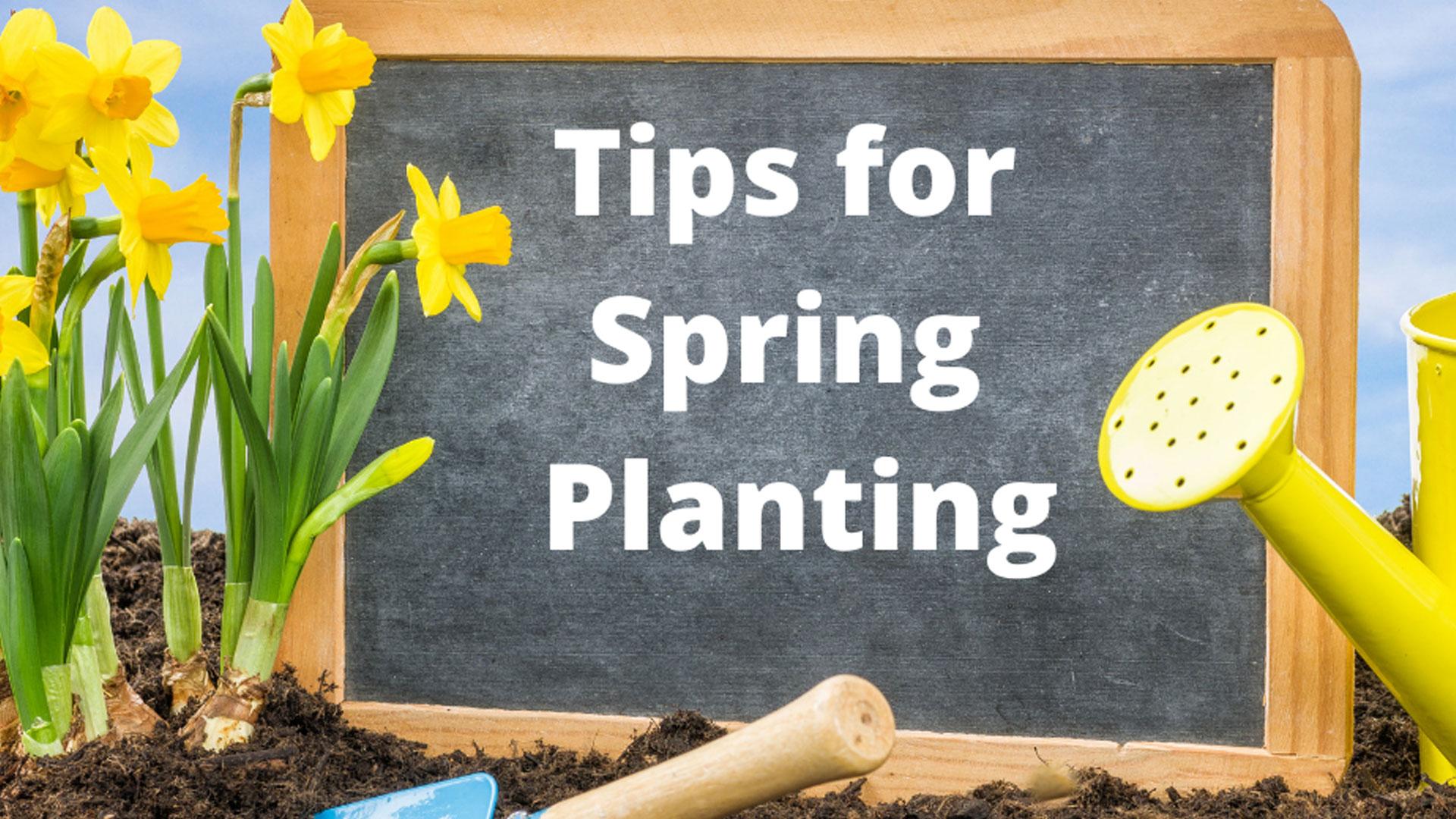 Spring Planting Landscape & Gardening