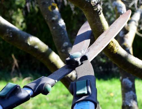 Spring Tree Pruning For Rejuvenation And Renewal