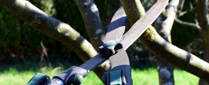 Tree Pruning Tree Trimming Service