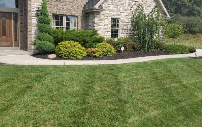 Lawn Seeding Aeration & Fertilizing